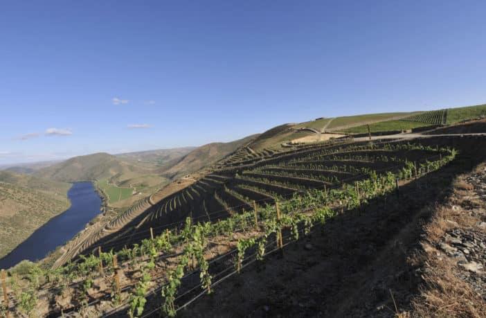 10 de setembro, Dia Internacional do vinho do Porto